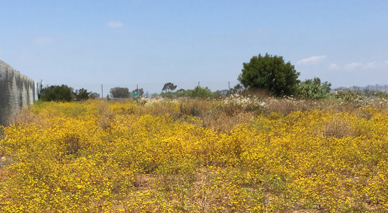 San Diego Vernal Pool Mitigation Site